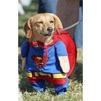 Lote 25 disfraces mascotas hermosos y divertidos